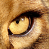 Lioneye's picture